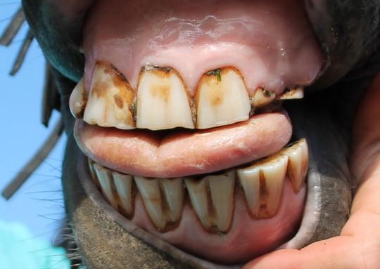 Dentition de Titoune! (incisives tordues et cassées) 221