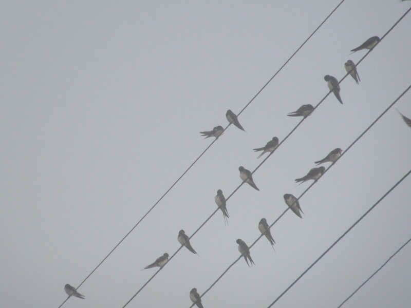 Animaux, oiseaux... etc. tout simplement ! 00710