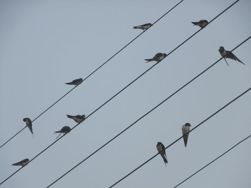 Animaux, oiseaux... etc. tout simplement ! 00810