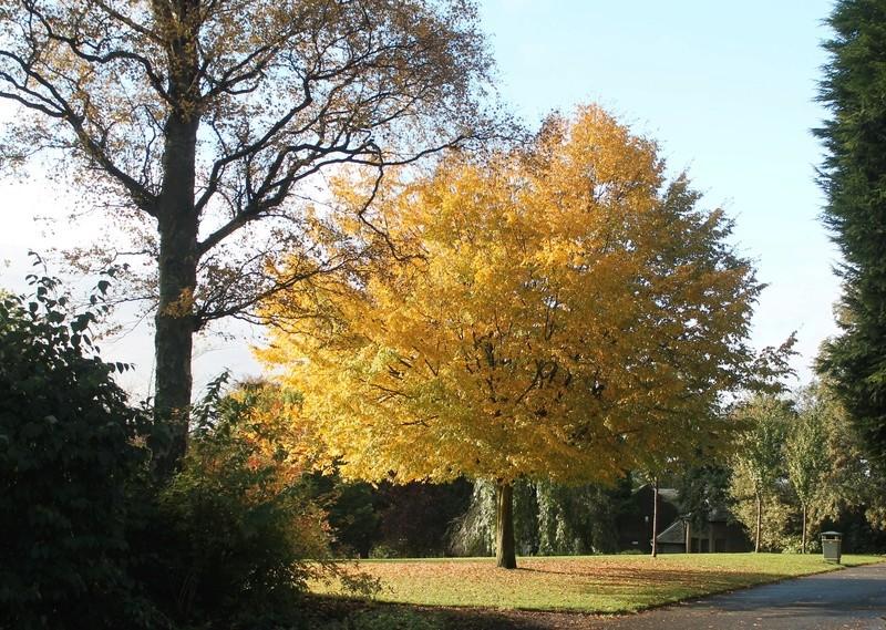 Dunfermline Glen today again... Img_2312