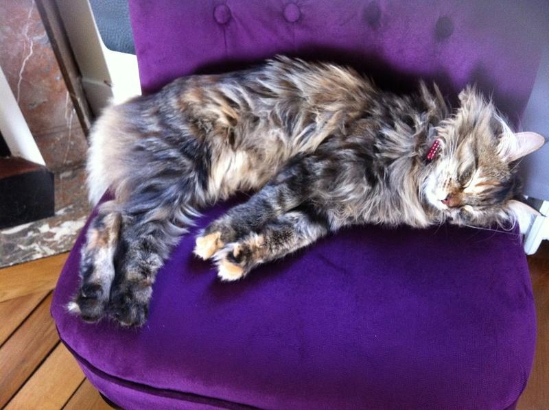 LOLITA-femelle tigrée angora-née le 22/08/2015 Img_0710