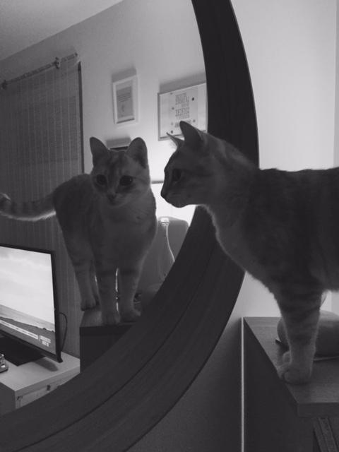 LOXI, chatonne tigrée crème/grise, née le 01/05/15 Inconn17