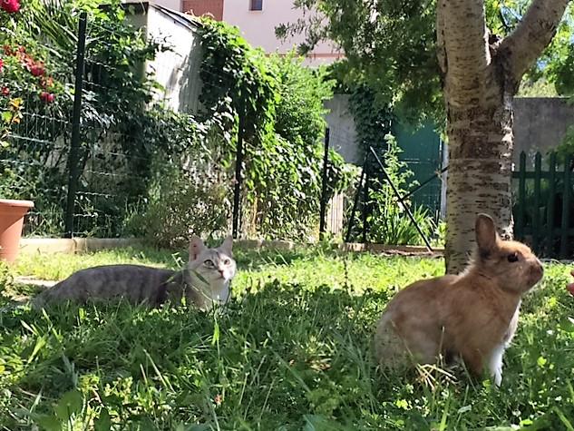 LOXI, chatonne tigrée crème/grise, née le 01/05/15 Inconn18