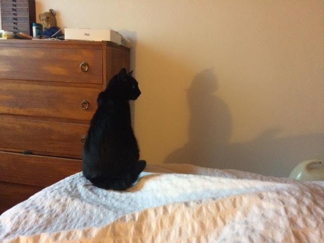 Lutine, chatonne noire de type européen, née le 20/04/2015 Lutine10