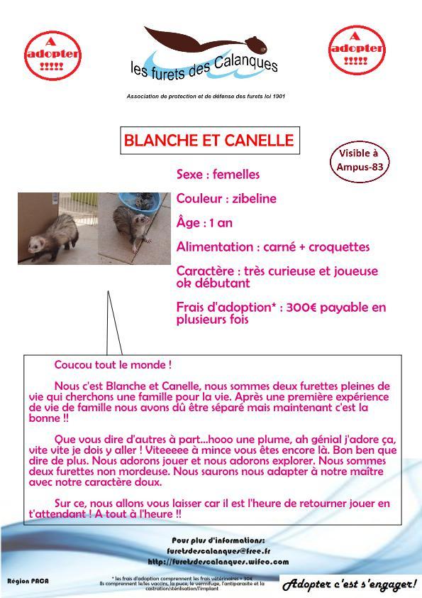 Adoptées - Blanche et Cannelle - Les furets des calanques Fiche_10