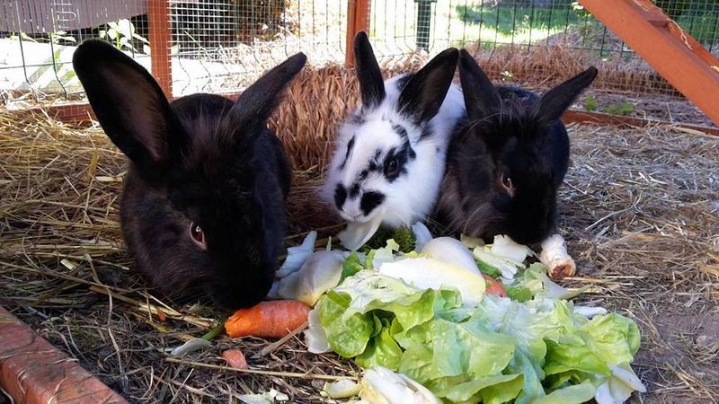 Sauvetage de lapins  RP 78 14516410