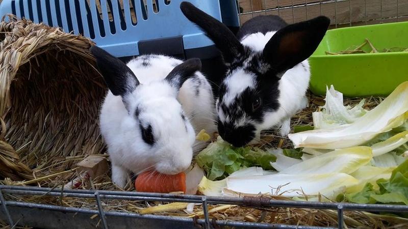 Sauvetage de lapins  RP 78 14522810