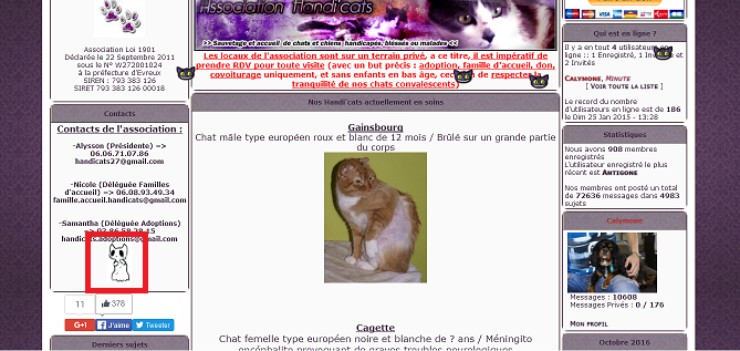 Chasse aux Chat'lloween ! - Page 2 Chat-f10