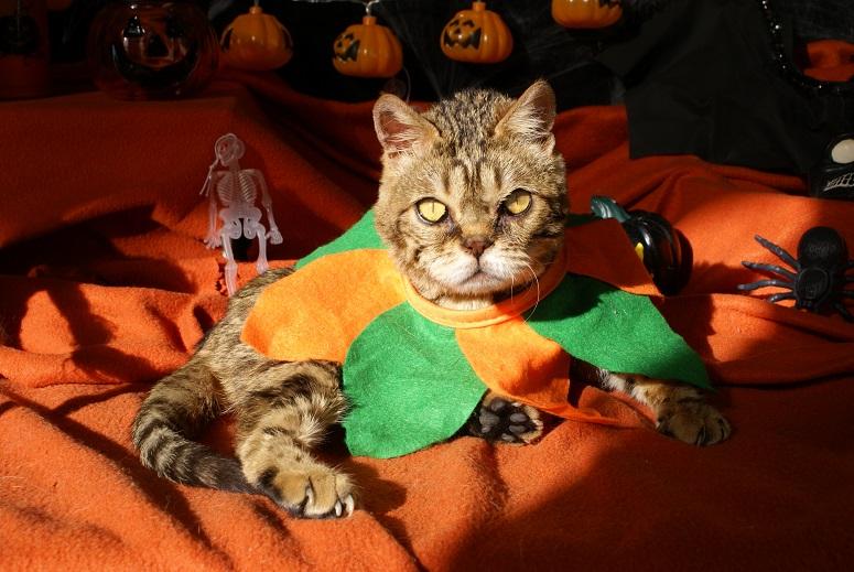 Lixy pour Halloween Dsc04613