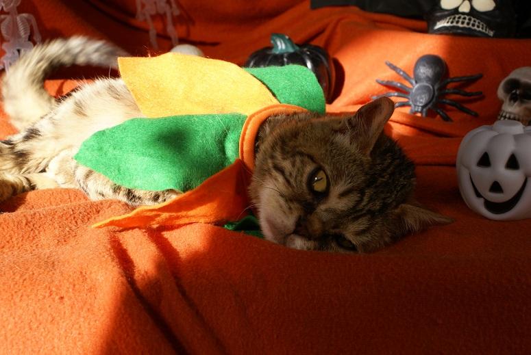 Lixy pour Halloween Dsc04614