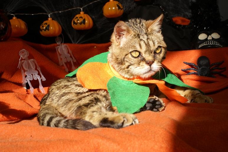 Lixy pour Halloween Dsc04615