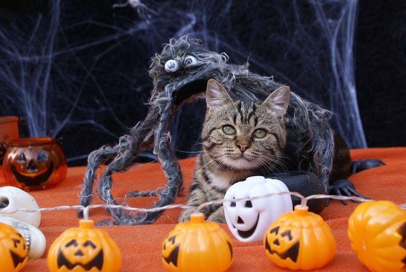 Aïna pour Halloween Dsc04710