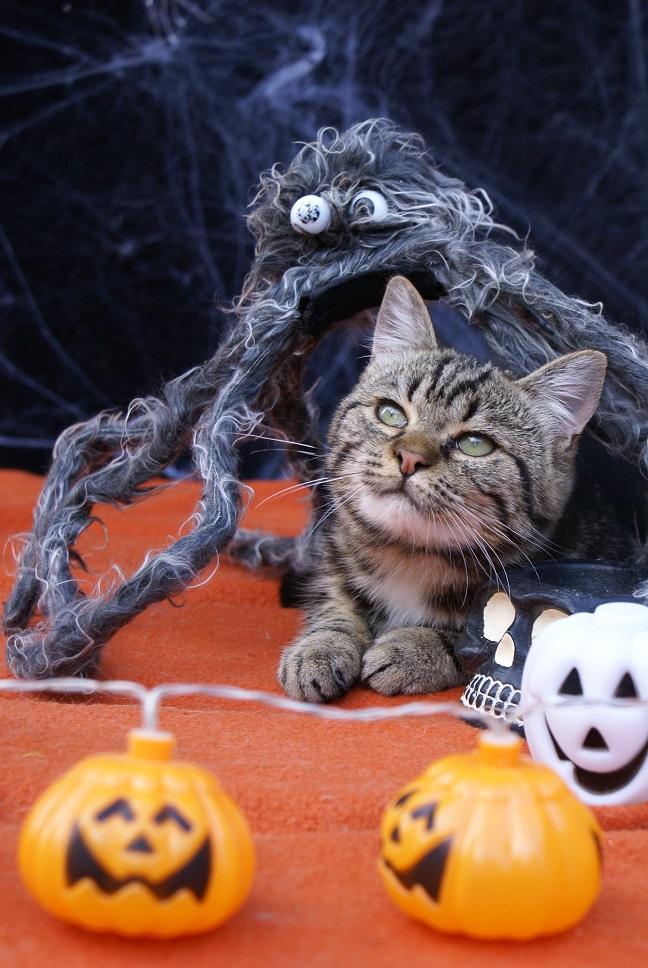 Aïna pour Halloween Dsc04711