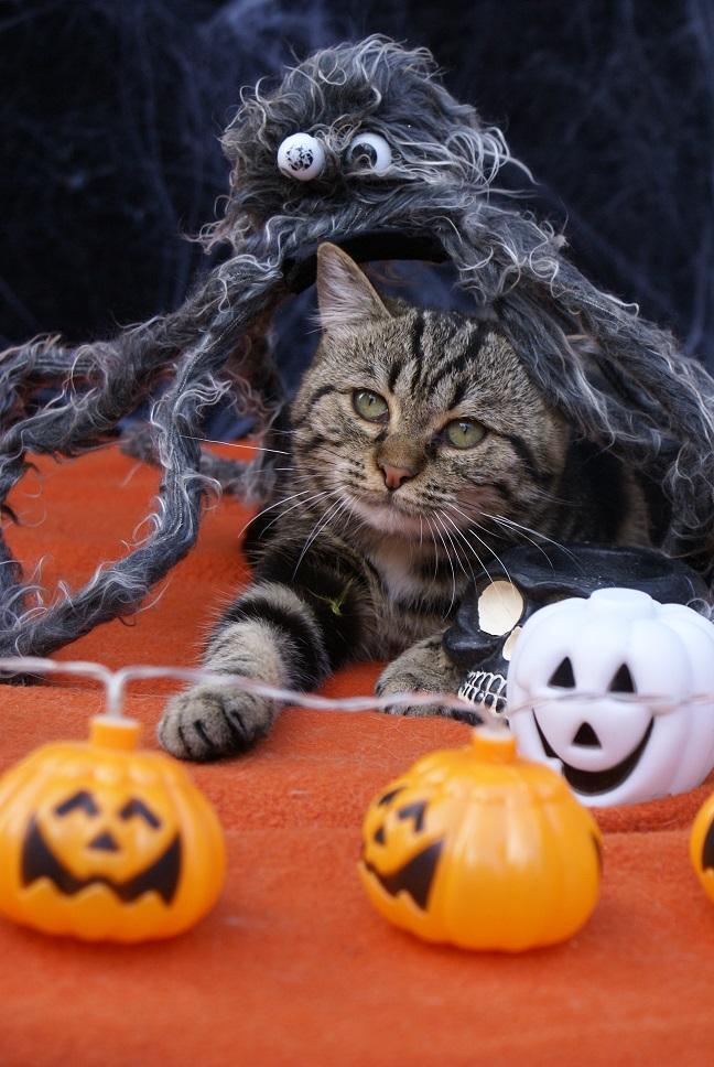 Aïna pour Halloween Dsc04712