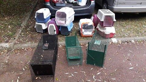 Sauvetage de lapins  RP 78 Lapins11