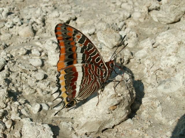 fil(et) à papillons - Page 10 Pict6710