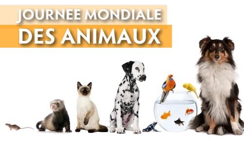 MARDI 4 OCTOBRE 2016 .....JOURNEE MONDIALE DES ANIMAUX Cc_gg_10