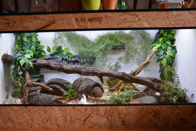 Installation pantherophis (WIP) Dsc_0010