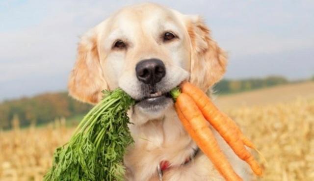 DÉBAT: Les chiens et chats peuvent-ils devenir végétaliens? Image26