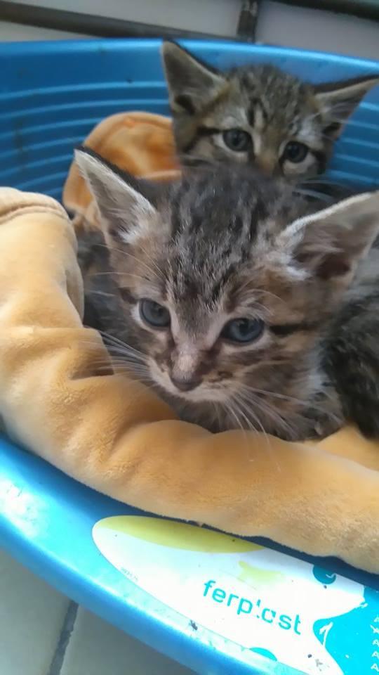 Moussaka / Carla né le 15 septembre 2016  14885710