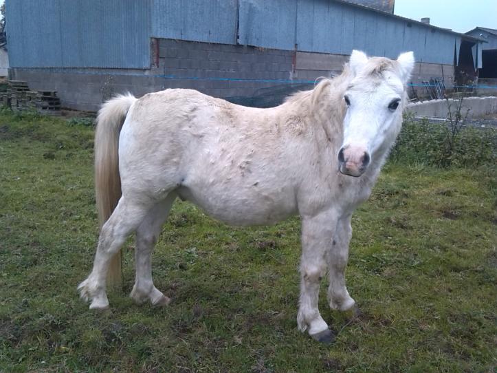 FRIPON - Welsh Pony né en 1993 - adopté en juillet 2015 par Claire 4-frip10
