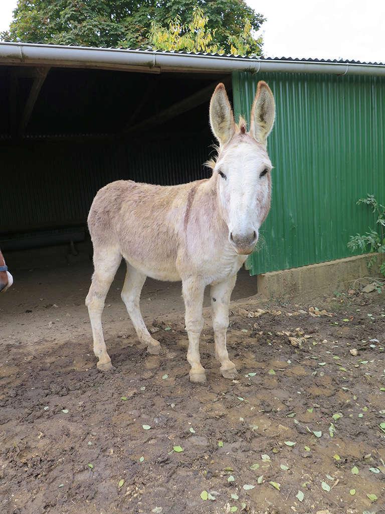 ZEBULON - ONC âne né en 2008 - adopté en octobre 2010 par Anita - Page 5 Img_0314