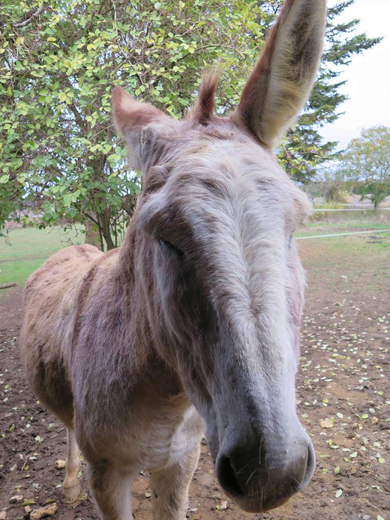 ZEBULON - ONC âne né en 2008 - adopté en octobre 2010 par Anita - Page 5 Img_0321