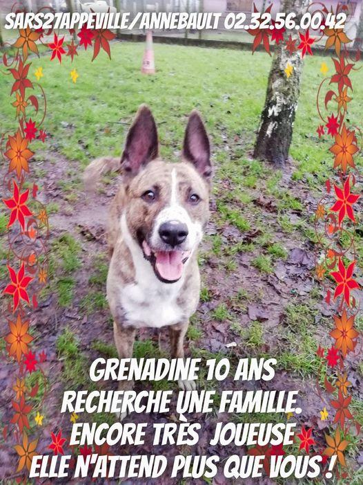 GRENADINE - 10 ans - Refuge de l'Esperance à Appeville Annebault (27) 13998210