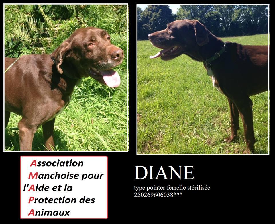 DIANE - ponter 7 ans et demi - AMAPA à Coutances (50) 14051710