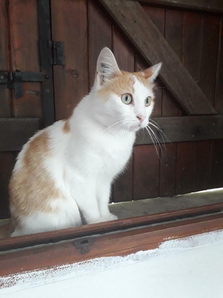Petite chatte martyre 5 ans adoption association vernon (27) 40492110