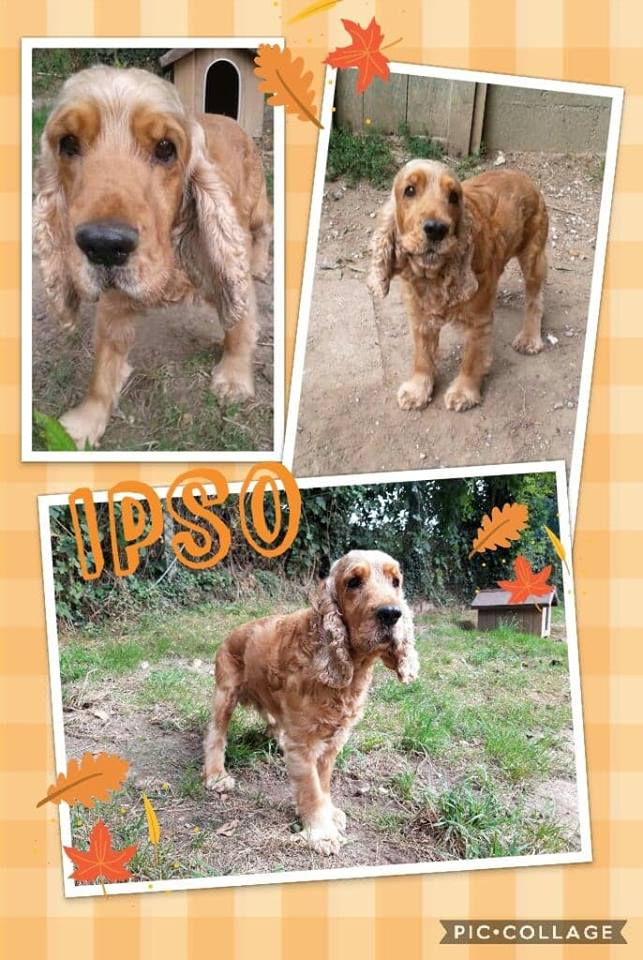 BOSTON et IPSO a adopter ensemble SPA de Dieppe 76 46766710