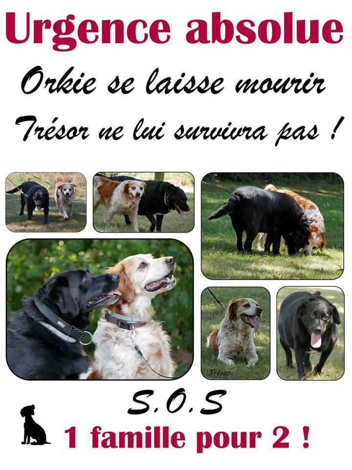 TRESOR ET ORKIE  2 seniors 10 ans SHPA du Havre (76) 52602510