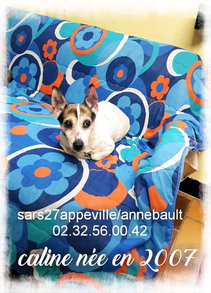 Les nouveaux Seniors du refuge d'appeville (27)  54523010