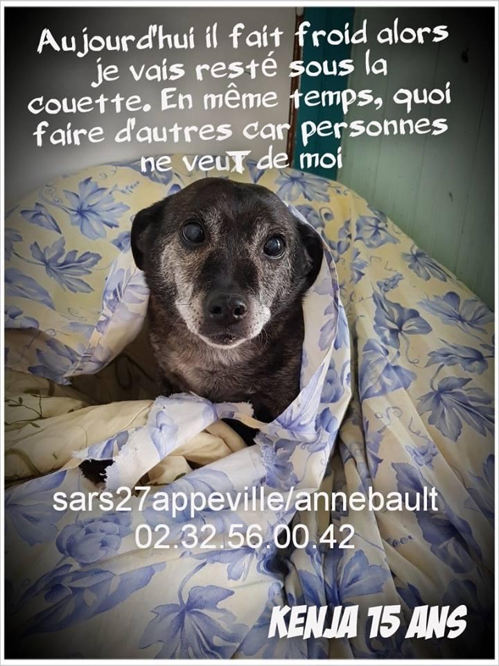 KENJA - x labrador 15 ans   (8 ans de refuge) -SARS Refuge  de l'Esperance à  Appeville Annebault (27) 56614010