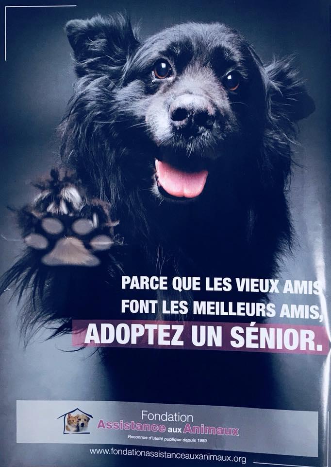 ATCHOUM -  x labrador 13 ans- ADAA à La Chapelle/Andaine (61 Adopte10