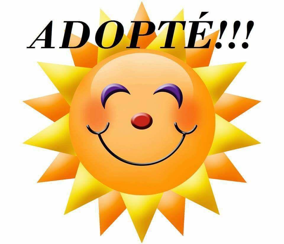 croisé epagneul 9 ans euthanasie programmée dans le 61 Adoptz10