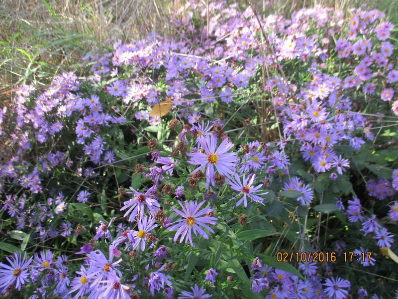 Aster d'automne  - Page 18 Img_2023