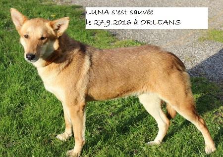 LUNA perdue à ORLEANS Luna_p12