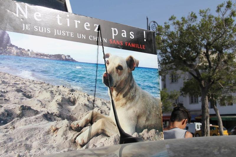 MASSACRES à CIEL OUVERT en Tunisie - Page 3 Manif_19