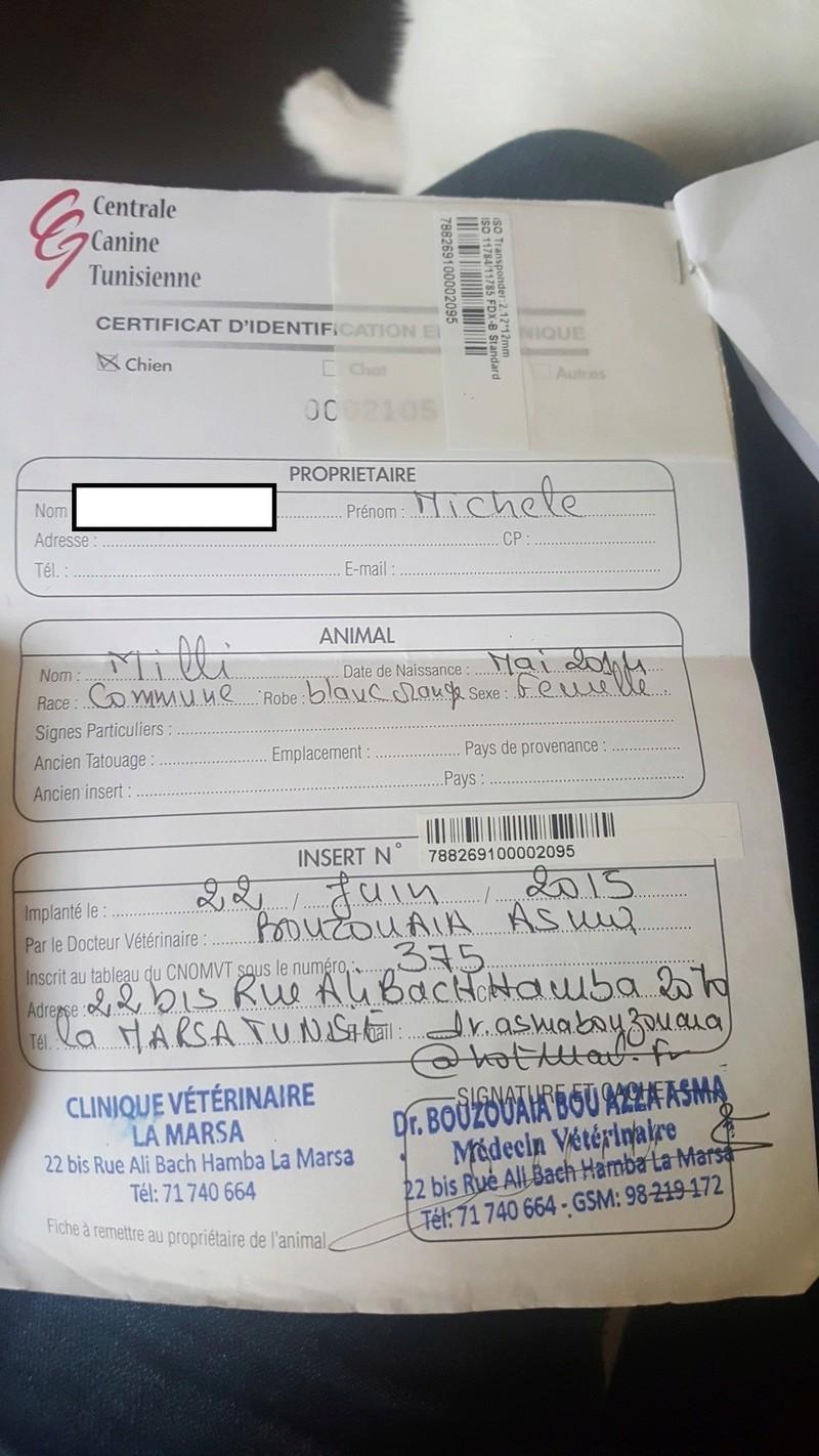 MILLIE, identifiée 788.269.100.002.095, en pension à Tunis Millie16