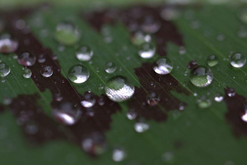«Nous vivons dans l'oubli de nos métamorphoses» - Paul Eluard - Page 5 Goutte10