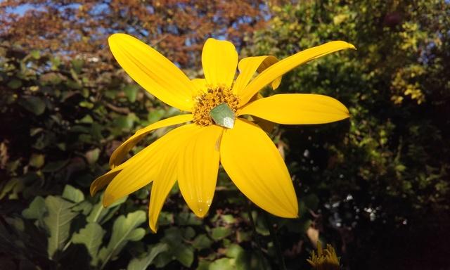 ondées d'octobre, le jardin renaît Rps20199
