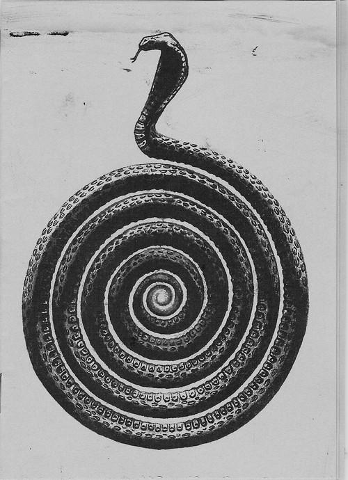 La spirale, mouvement de vie. - Page 8 Tumblr10