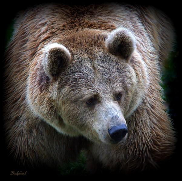 sur la terre des ours +1 Img_0910