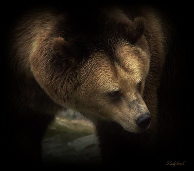 sur la terre des ours +1 Img_0911