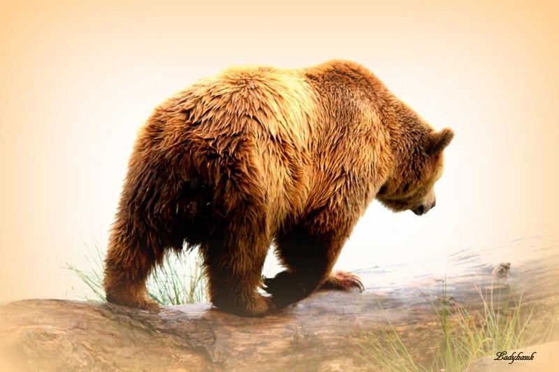 sur la terre des ours +1 Img_0912