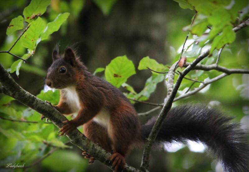 l'écureuil du mardi Img_1011