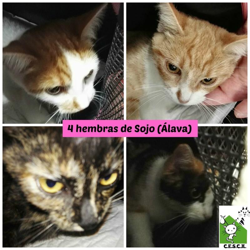 CESCA. La unión de Apa Sos Vitoria y Esperanza Felina por los gatos callejeros de Álava - Página 7 Picmon12