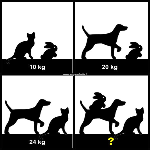 Combien pèsent les 3 animaux réunis ? Chien-10