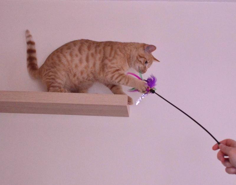 luffy - LUFFY, chat européen tigré roux, né le 05/02/16 Luffy_13